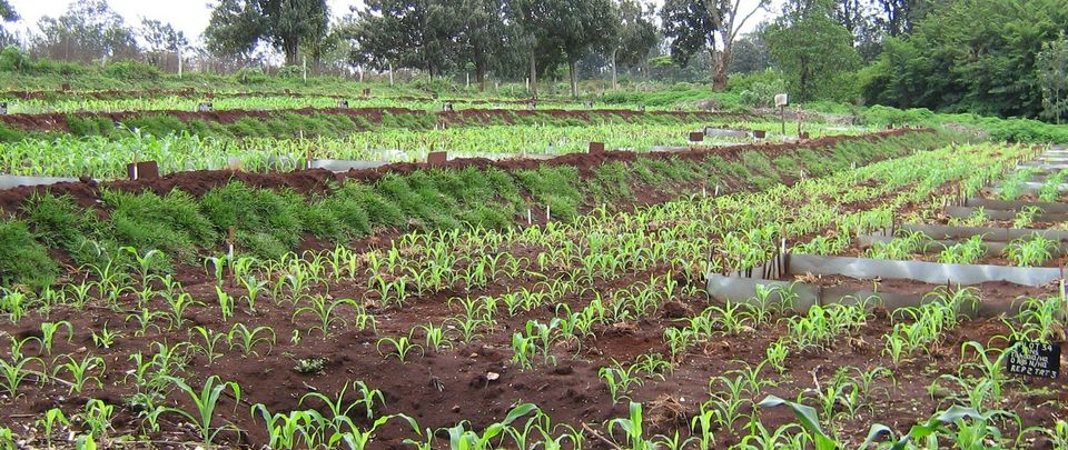 Soil fertility field trial Kenya Johan Six ETHZ