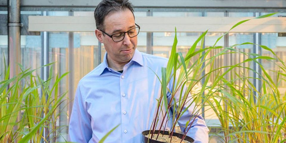 Biologist Marcel van der Heijden with corn plants: fungi can boost yields by over 20 percent. (Image: Marc Latzel)