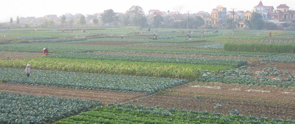 Vegetable fields Hanoi Johan Six ETHZ