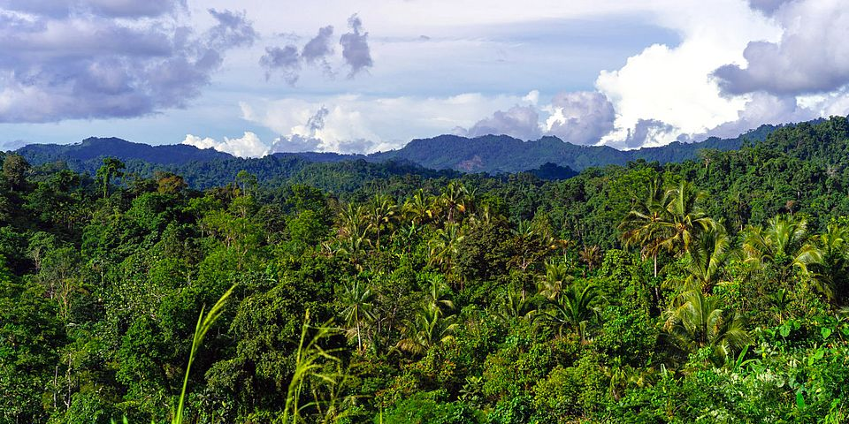 View of mature forest and mountains, Morobe Province, Papua New Guinea. Image: Zacky Ezedin