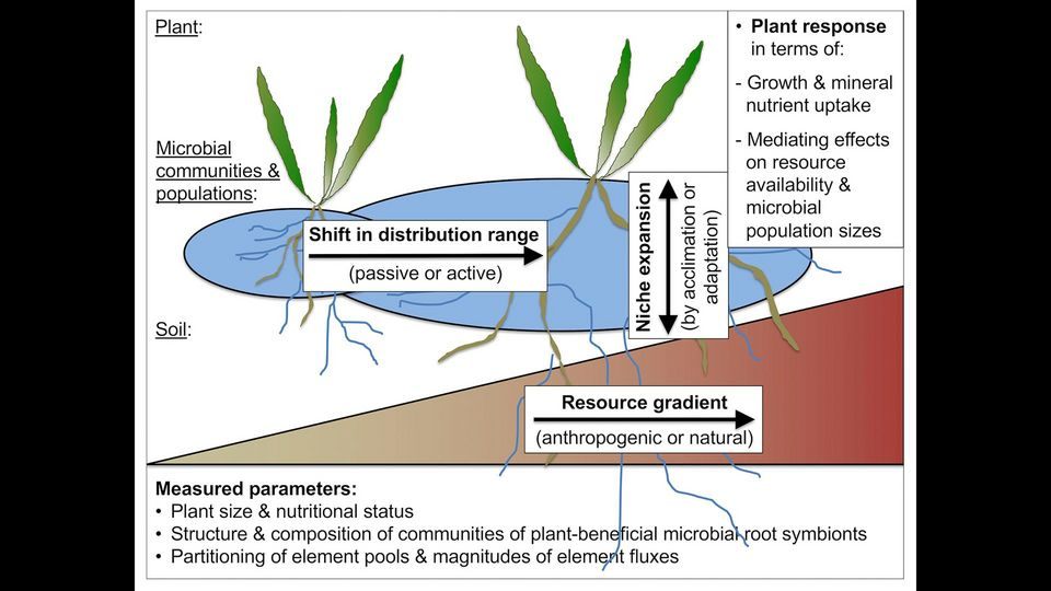 plant-microbe interactions under changing conditions