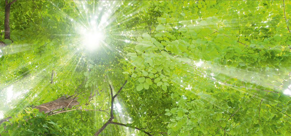 Sun through trees plant day 2019