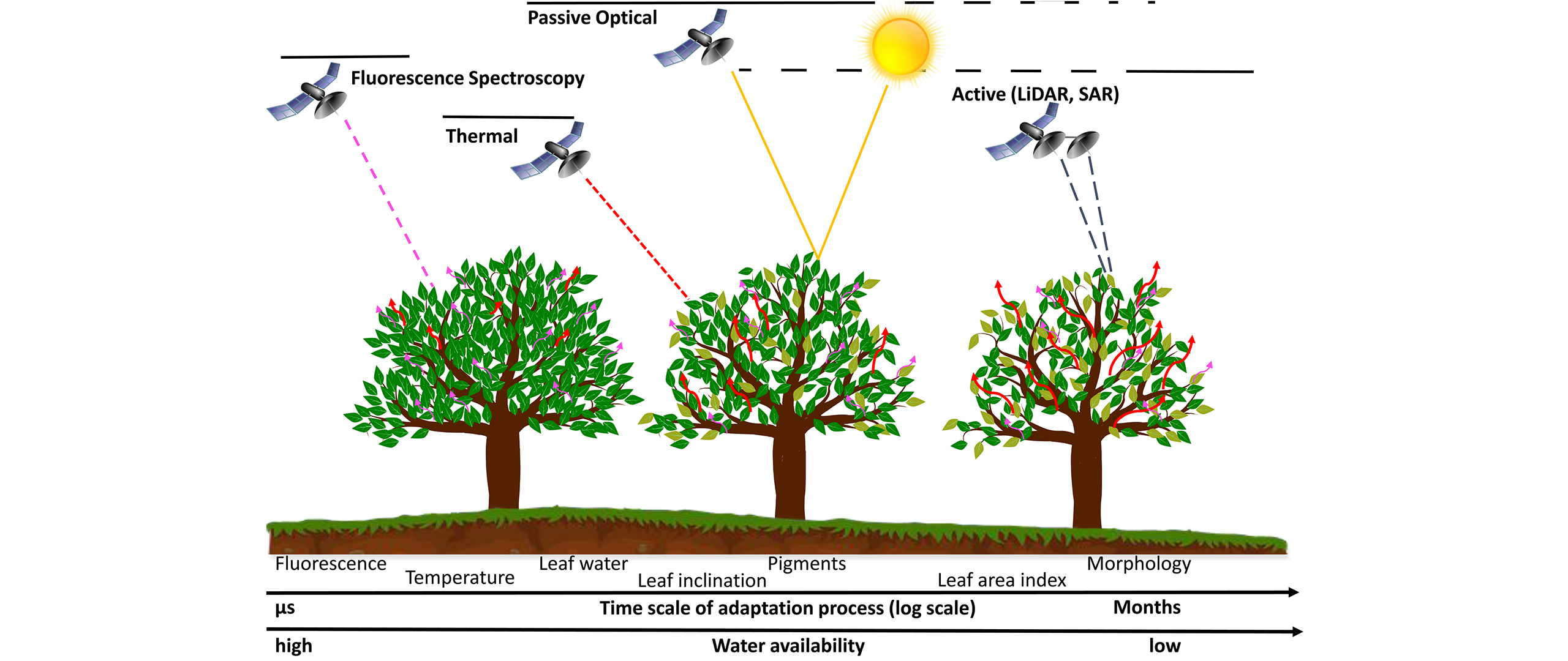 Remote sensing of plant water relations